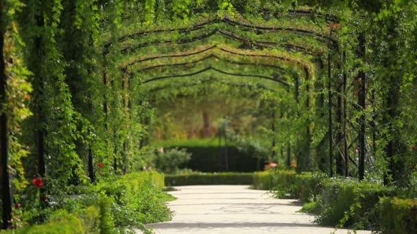 zelený obloukem v zahradě
