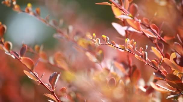krásné hnědé listy a jasné slunce nad rozostřeného pozadí