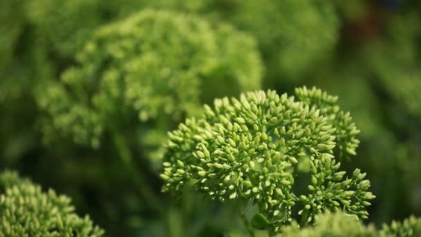 grüne Pflanzen auf blauem Grund