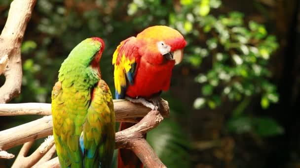 Papoušek papoušek blured pozadí