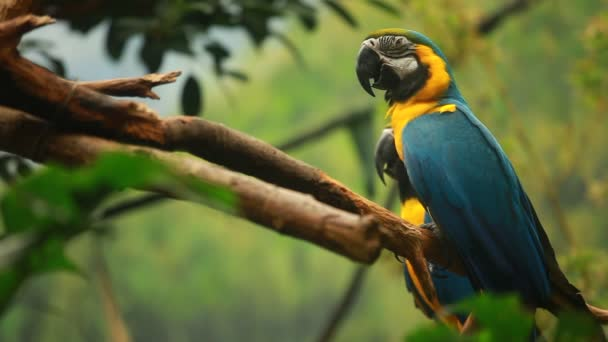 Macaw parrot in blured background