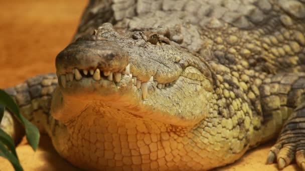 Velké krokodýl na žlutém pozadí písek