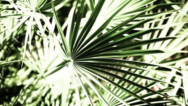 krásné zelené listy a jasné slunce nad rozostřeného pozadí