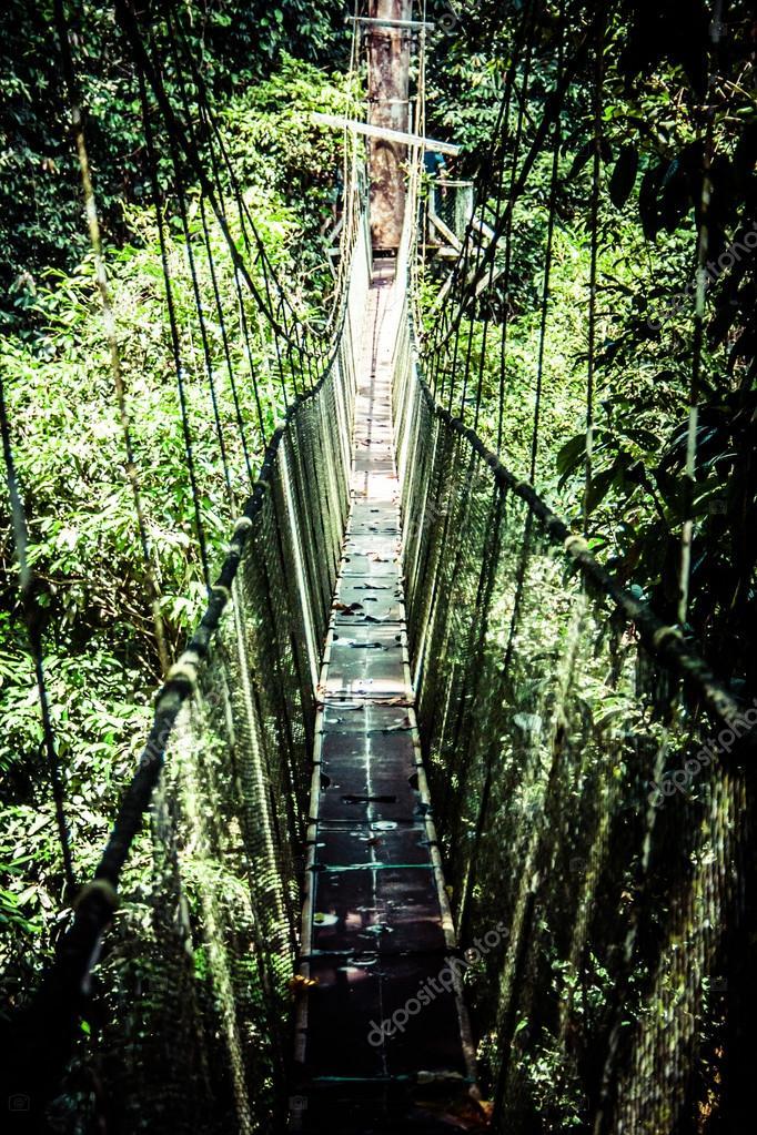 Suspension bridge to mangrove tropical forest.