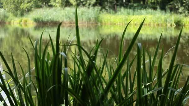 Zelená krajina příroda