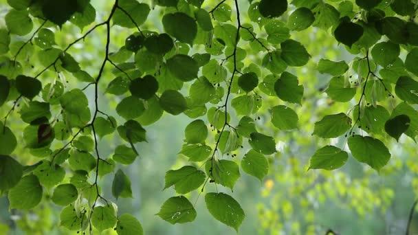 krásný strom v lese letní