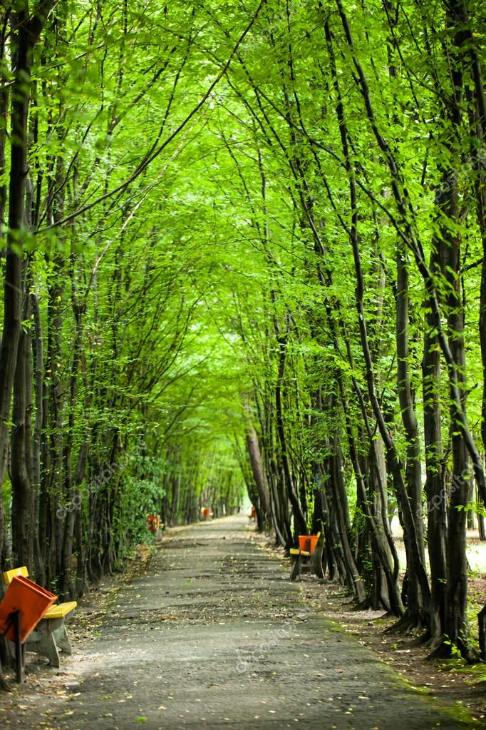 Green forest trees tunel in park