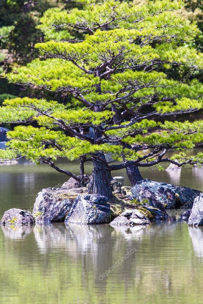 jardn zen japons en parque templo kinkakuji kyoto u foto de stock