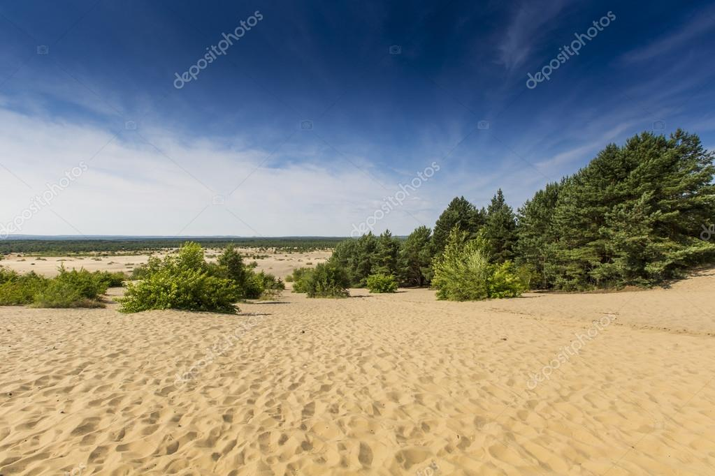 Bledow Desert, an area of sands between Bledow and the village of Chechlo and Klucze in Poland.