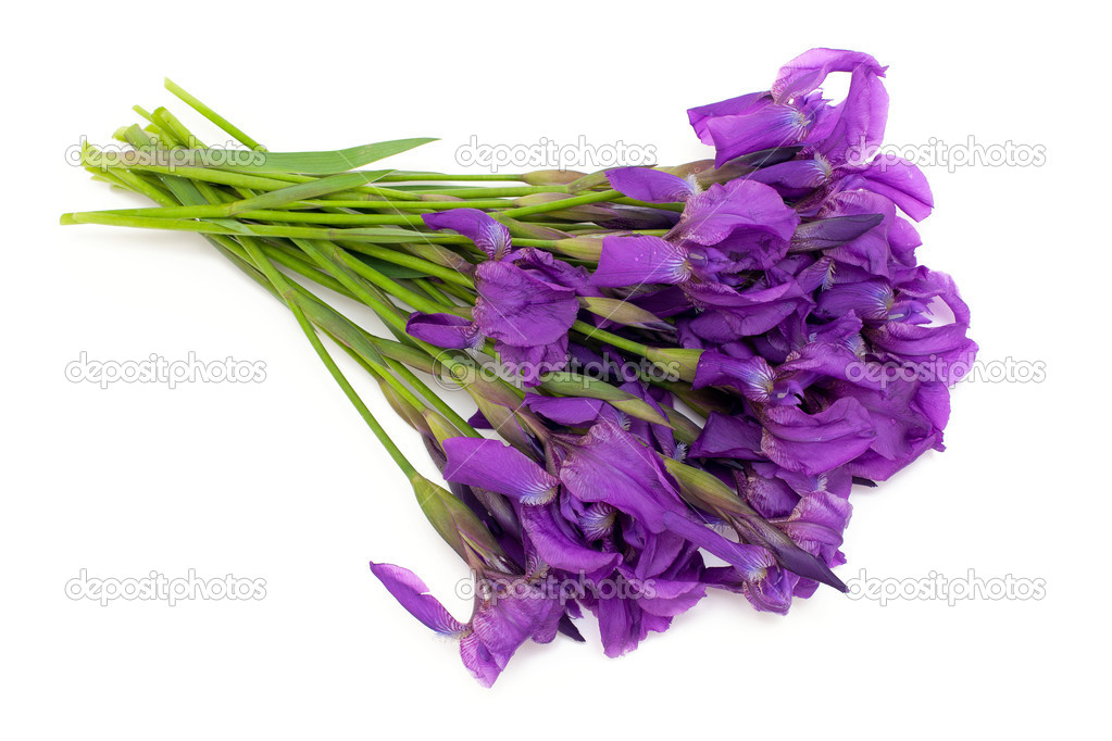 Mazzo Di Fiori Iris.Bunch Of Iris Flowers Stock Photo C Dianazh 28572677