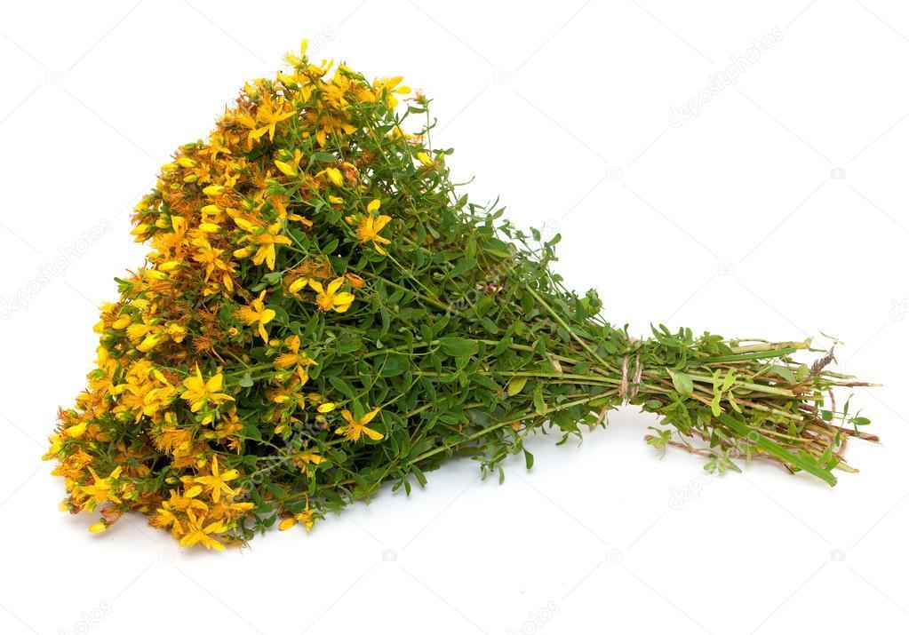 Цветы похожие на зверобой