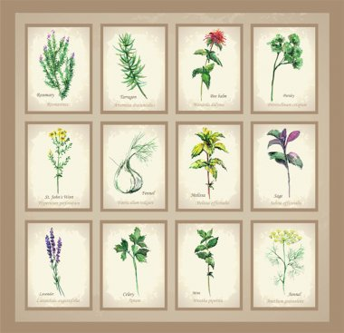 Illustration Spicy and curative herbs. Collection of fresh herbs