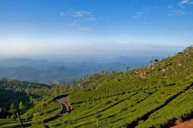 Landscape of tea plantations in Haputale, Sri Lanka