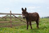 Photo Brown donkey