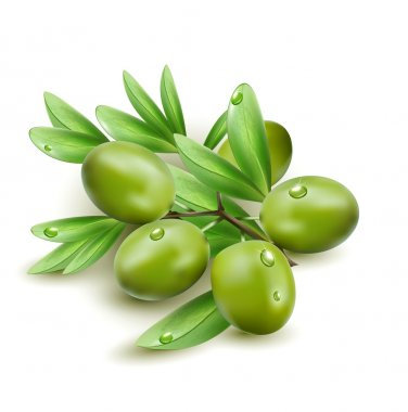 Vector green olives isolated on a white background stock vector