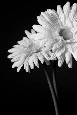 White flowers - 01