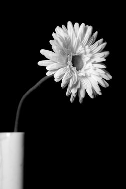 White flowers - 03