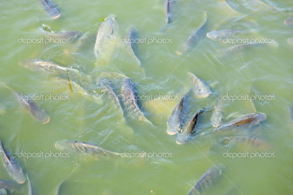 картинки рыба в бассейне бронирования
