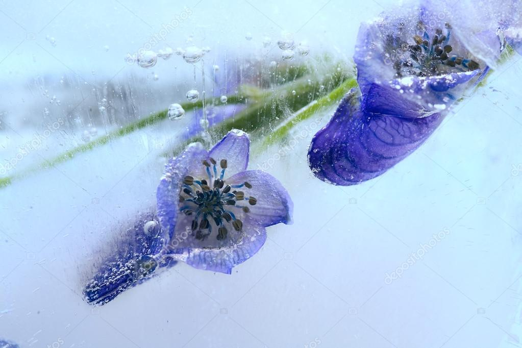 Frozen blue flower