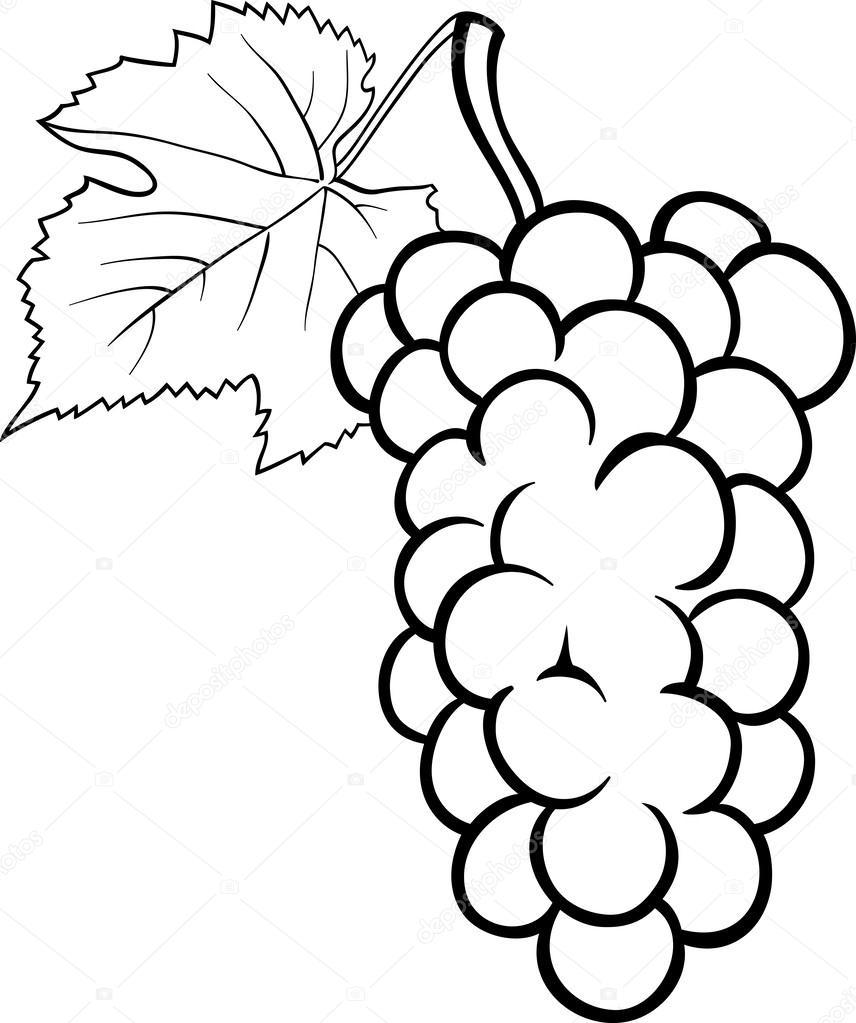 Boyama Kitabı Için üzüm şekil Stok Vektör Izakowski 26058401
