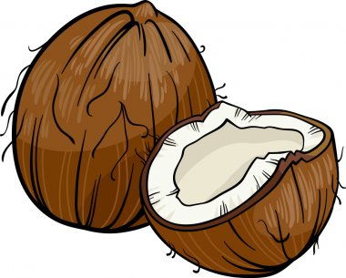 coconut cartoon illustration