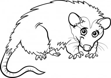 opossum animal cartoon coloring book
