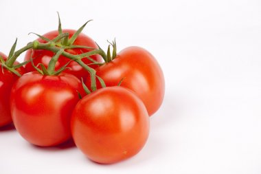 Ripe tomatoes on a branch on white