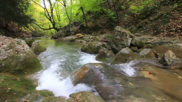 čisté lesní vody