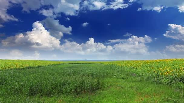 pole za zatažené obloze