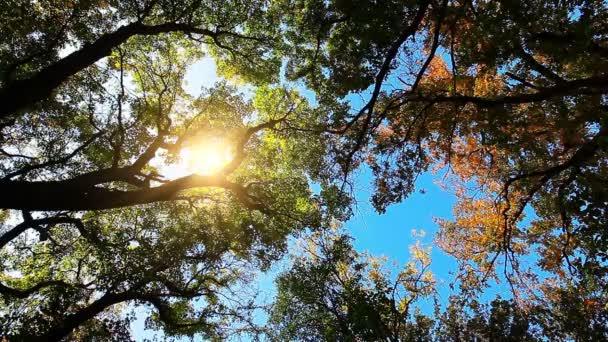 őszi erdő bőrönd