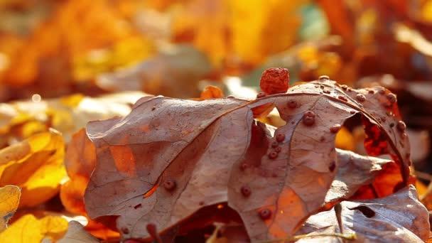 Beruška na žlutý list