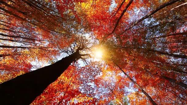 podzimní Les kufry