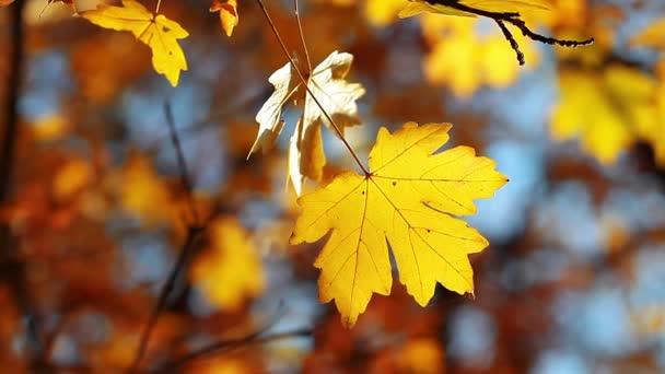 őszi lombozat