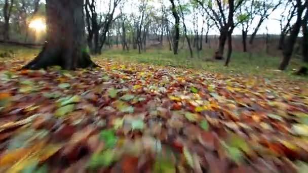 žluté listy