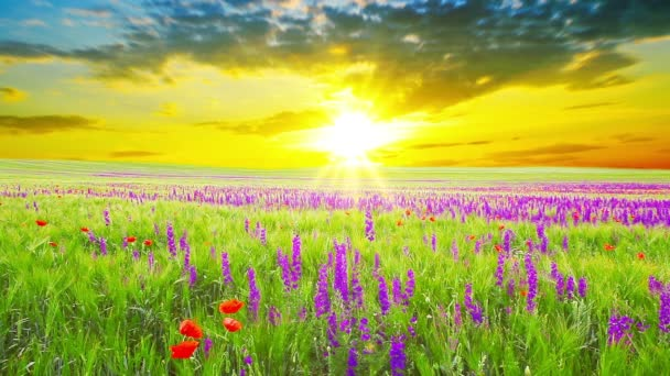violette Blüten