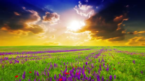 fialové květy