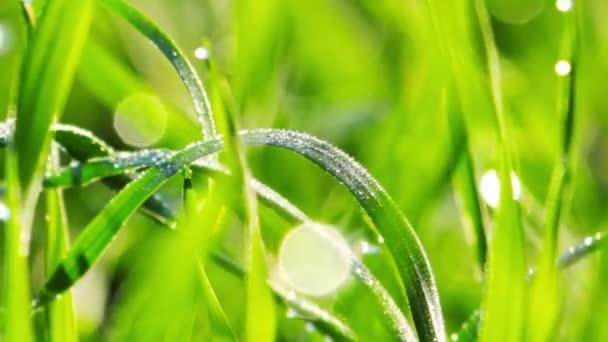letní tráva