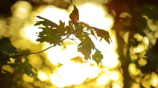 luce solare estiva