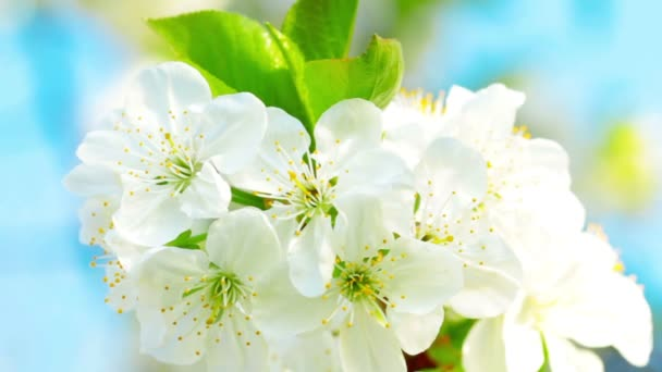 Virágszálnak Apple