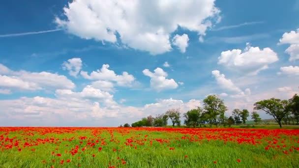 mák Květiny