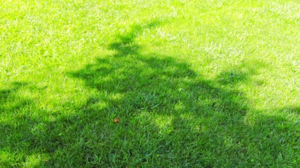 stíny stromů na trávě
