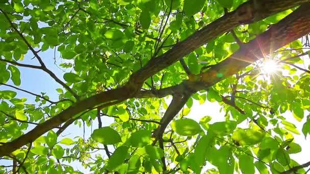 zelené listoví