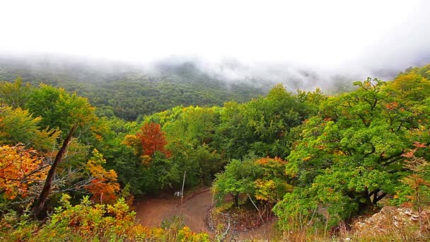 mlha nad zelený Les