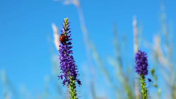 Katicabogár a virág