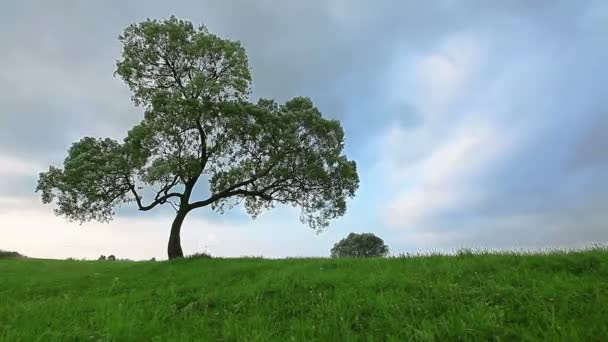 strom nad modrá obloha