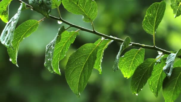 dešťové kapky na listech