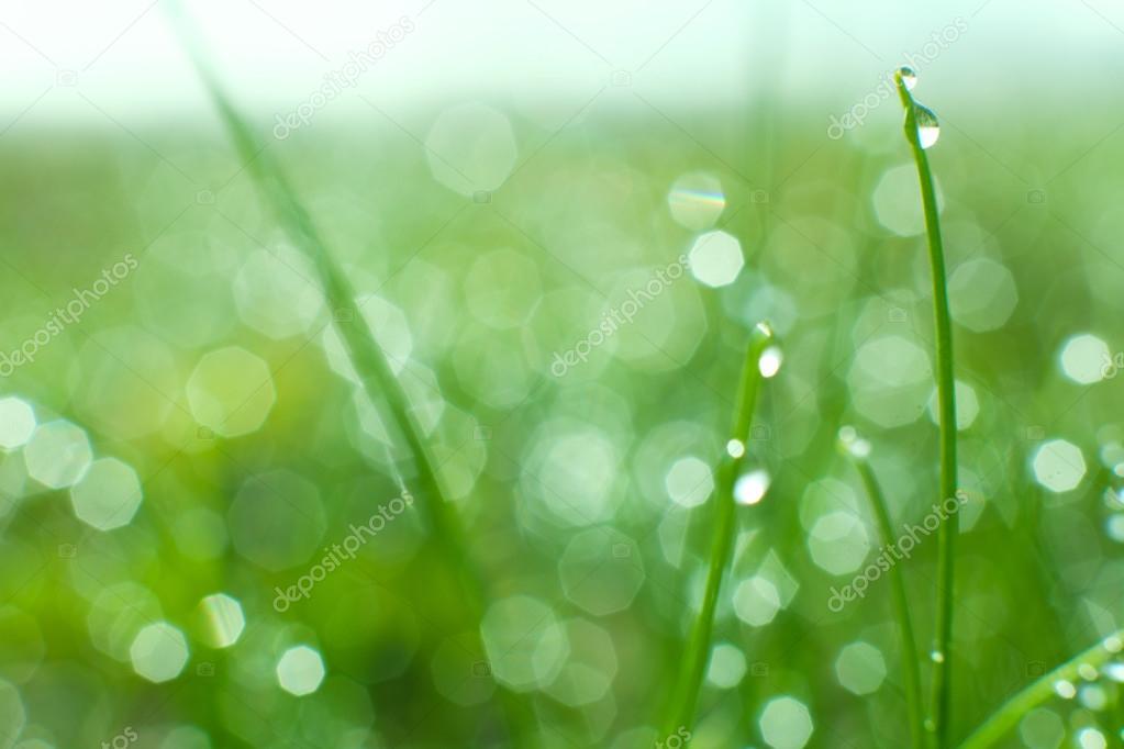 Sfondo Verde Natura Foto Stock Mulikov 48288349