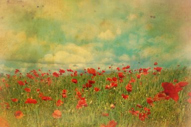 Red poppies fields with grungy effect
