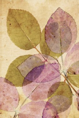 Beautiful, subtle vintage background with beautiful leaves