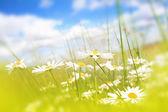 Beautifufl tavaszi rét háttér